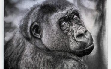 ape irene's way