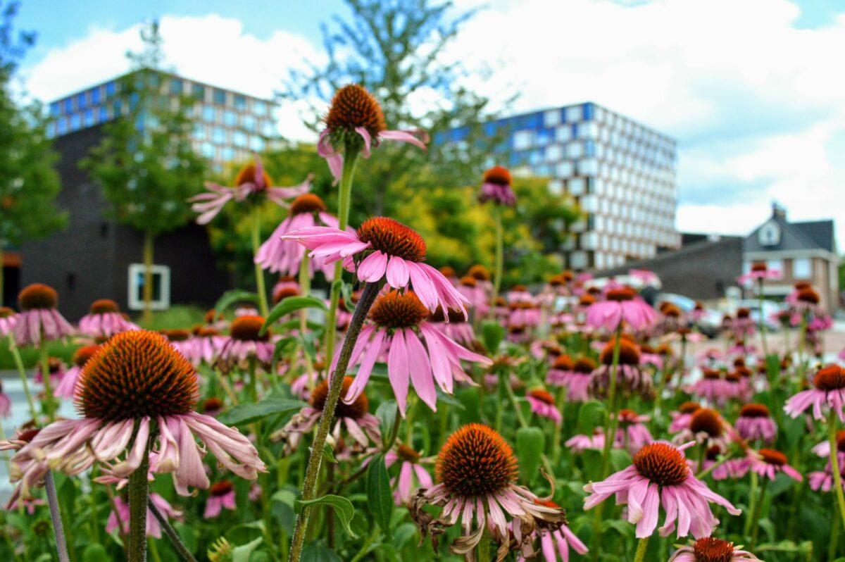 roombeek bloemen_1