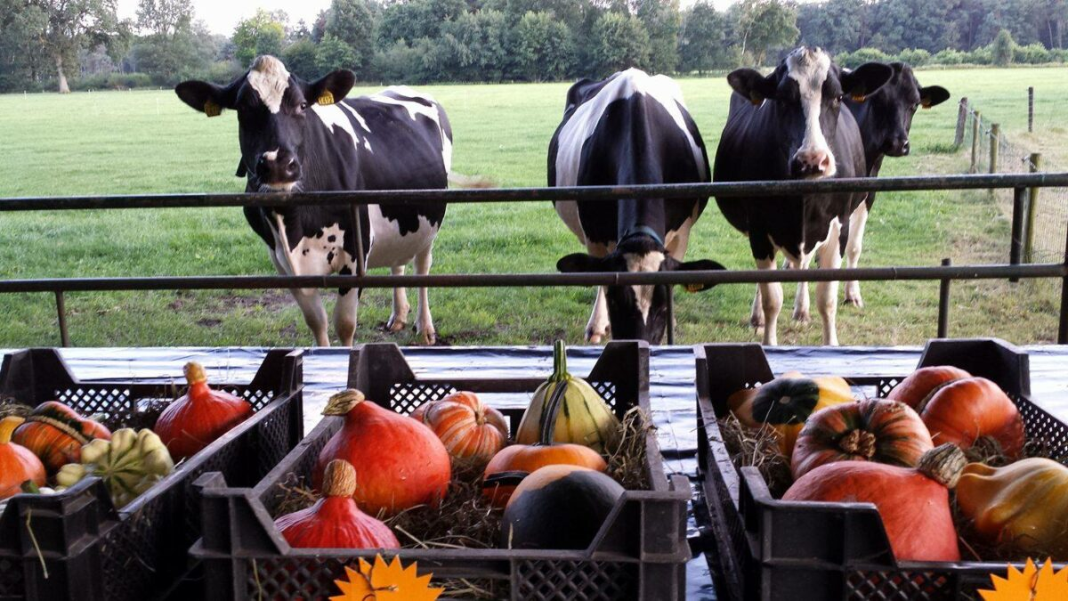 rondleiding boerderij