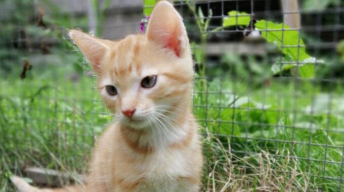 kitten-guppie