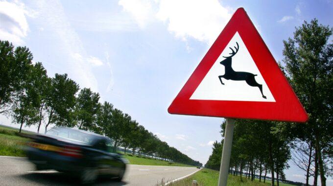 dood dier langs de weg_ verkeersbord pas op overstekend wild