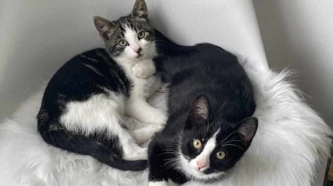 Kittens in Gouda