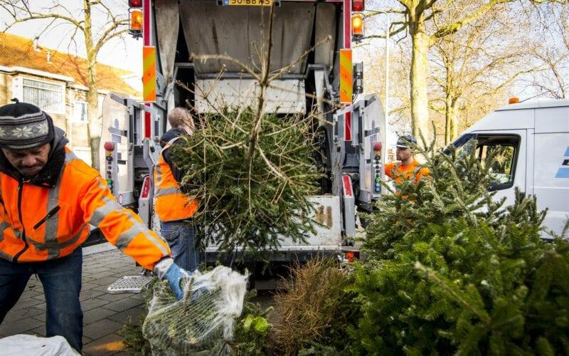 kerstboom aan de weg