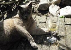 wijn voor je huisdier