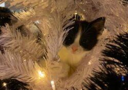 kerst met katten