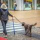 hondenbelasting