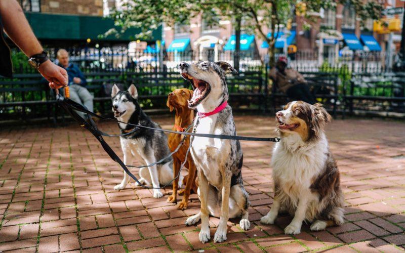 Unsplash Honden uitlaten Haarlem