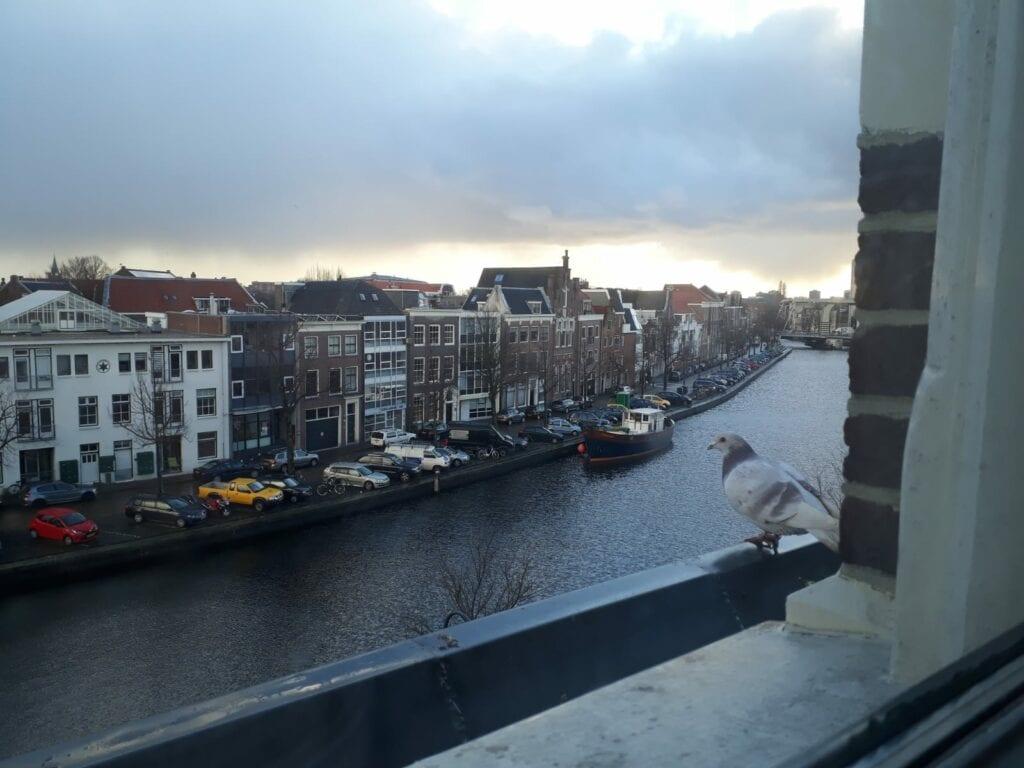 Uitzicht op het Spaarne door Roos