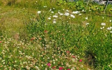 Bloemen plukken in Haarlem in de Plukweide