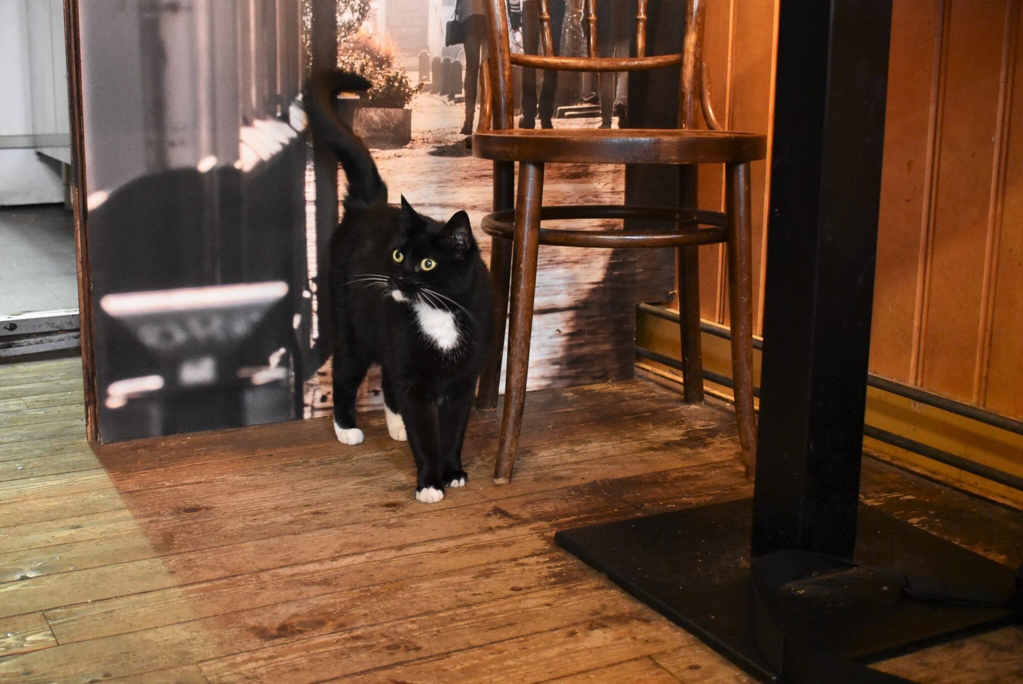 Café De Overkant kat | foto: indebuurt Haarlem