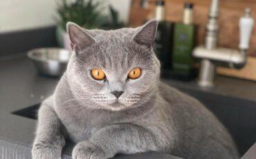 Hengelose katten
