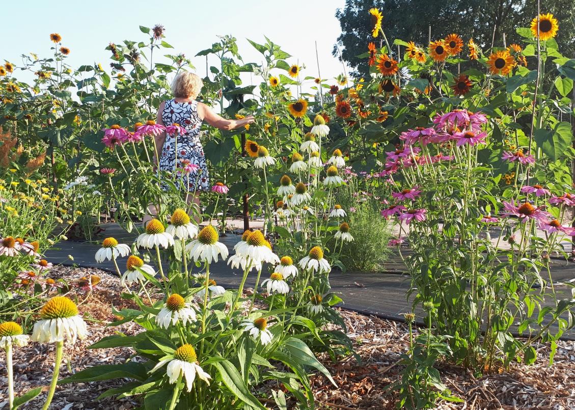 bloemenpluktuin-zelf-bloemen-plukken-mookhoek