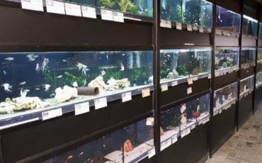dierenspeciaalzaak-koko-oud-beijerland-aquarium