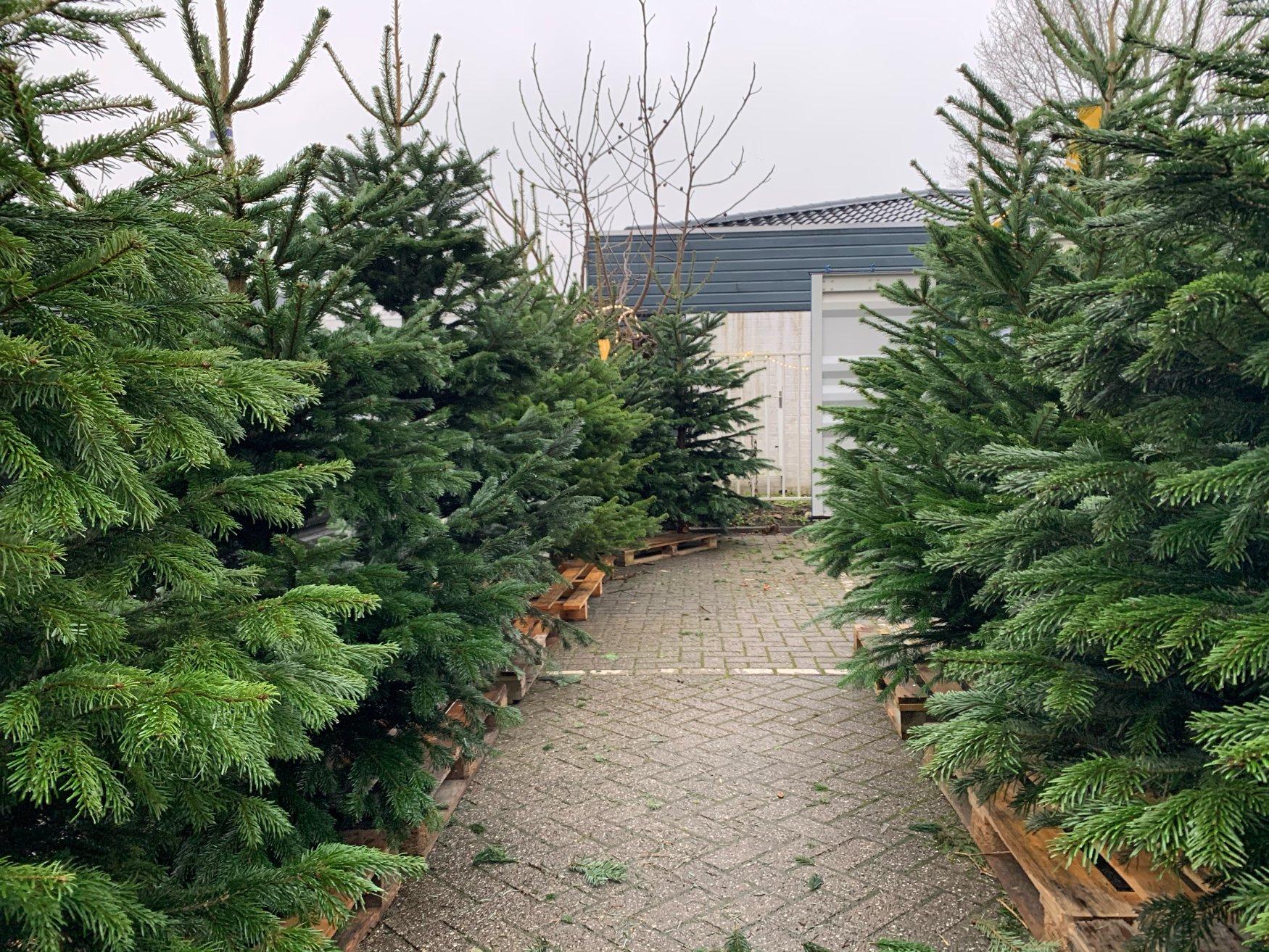Dierenspeciaalzaak Koko kerstbomen 2020 01