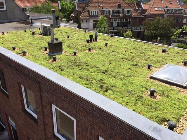 Groen dak sedumdak aanleggen subsidie korting Interpolis