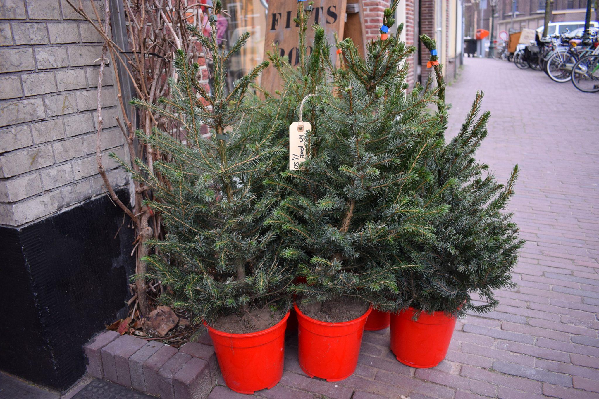 aanbieding kerstbomen