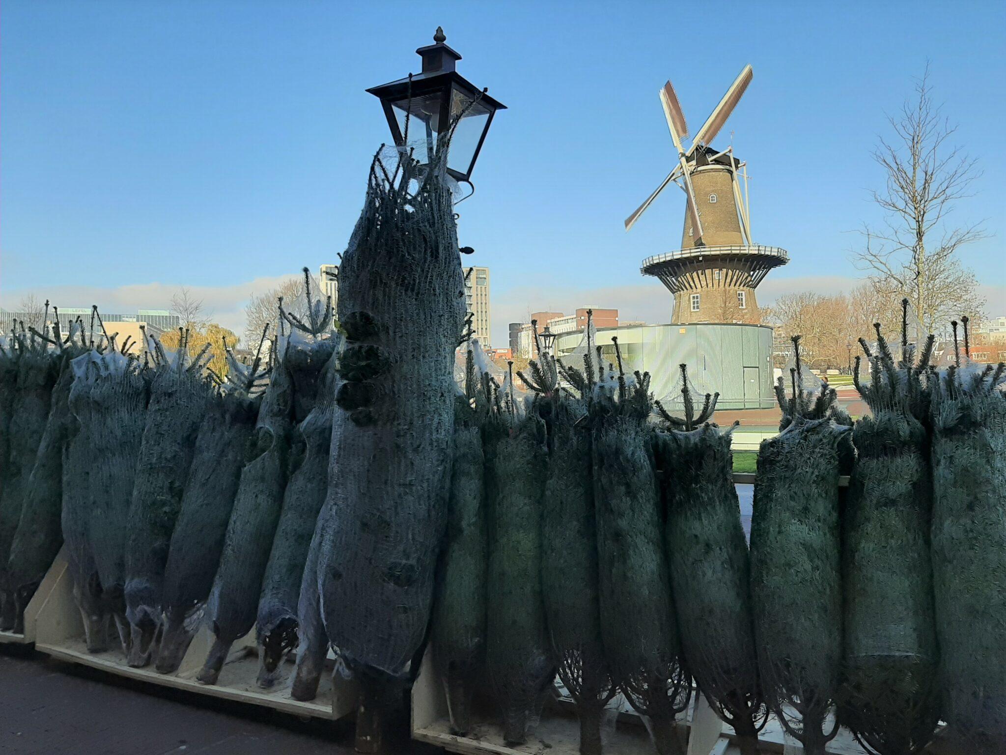 Kerstbomen Hartwijk