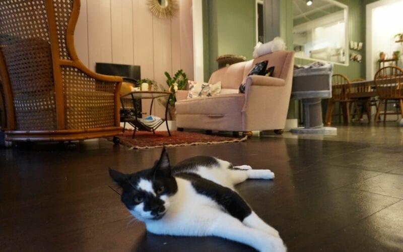 kattencafé horecazaak kat leiden