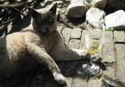 Aanbiedingen kat met wijn