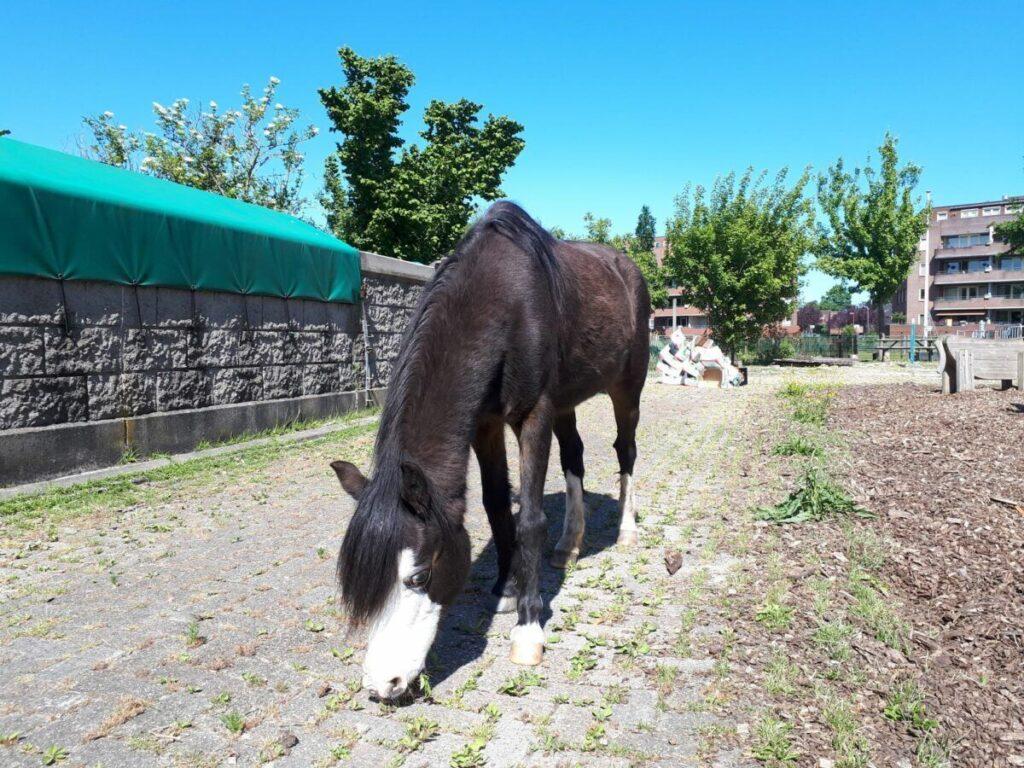 Pony Balijhoeve