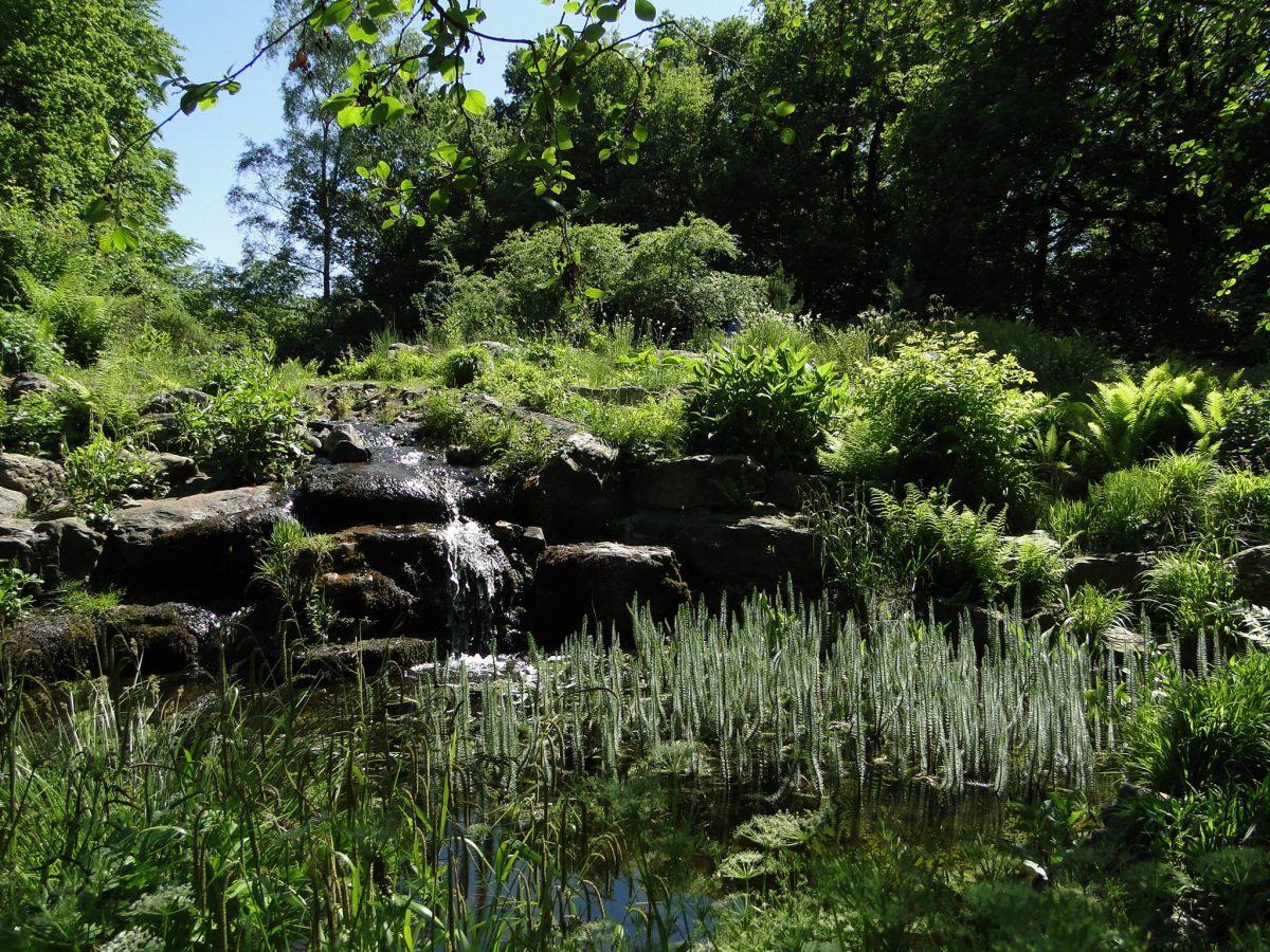 Hortus Nijmegen - indebuurt Nijmegen