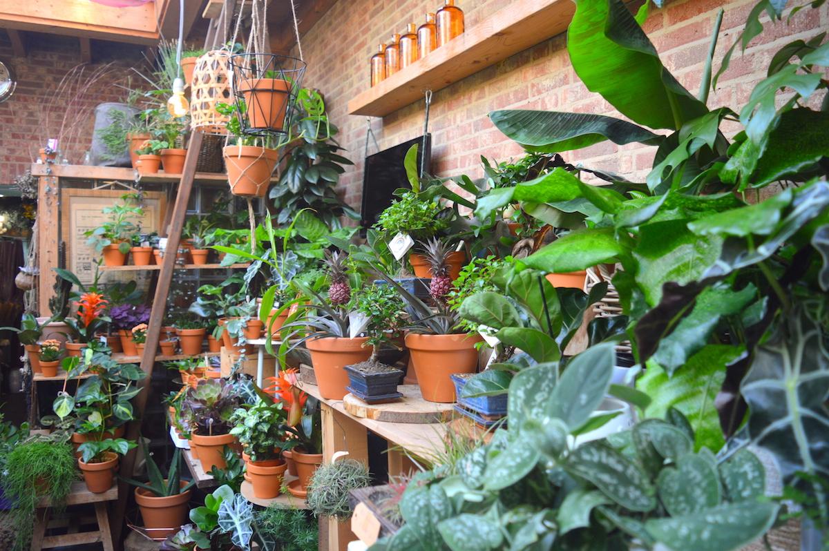planten in Nijmegen