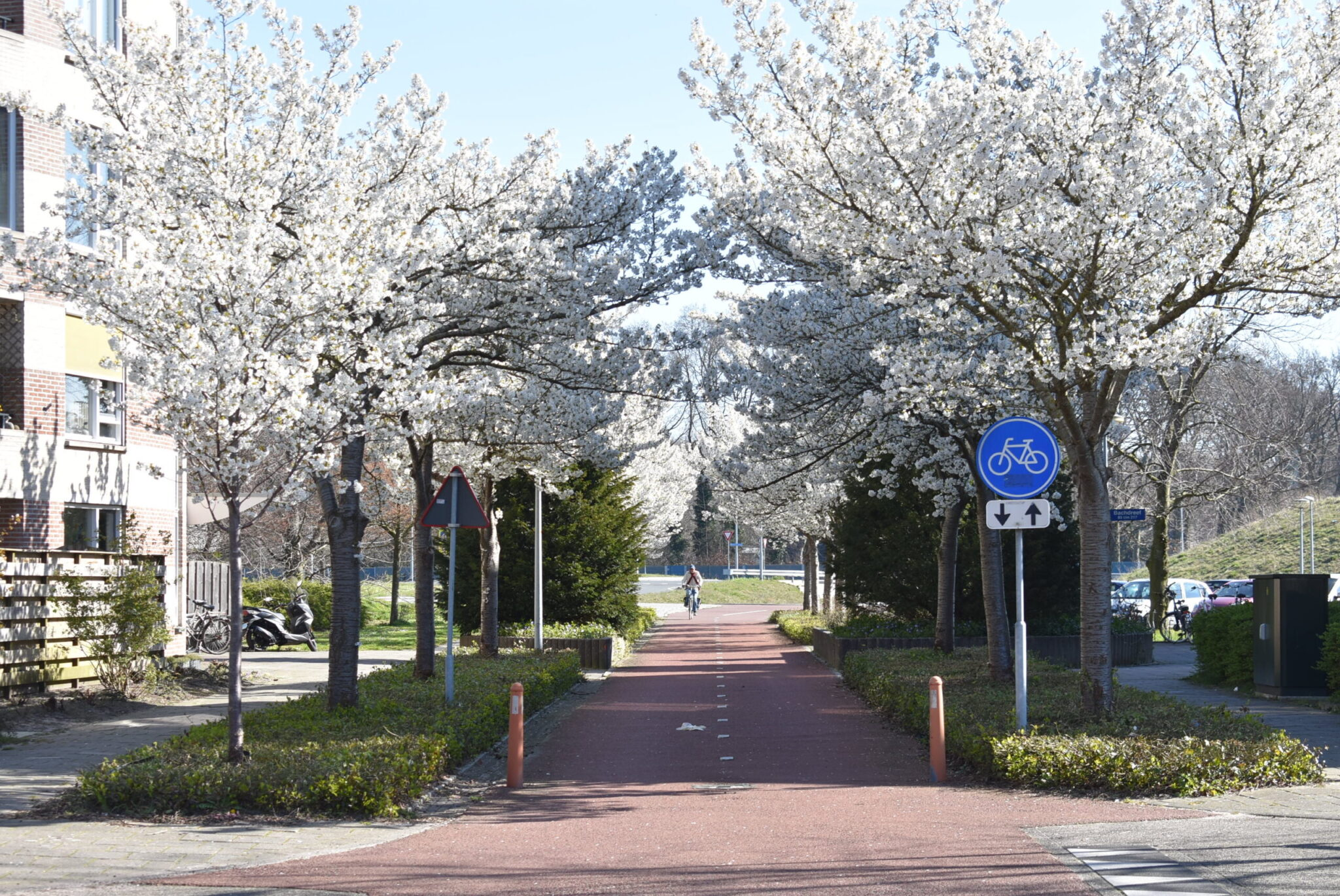 bloei bloesem harderwijk lente