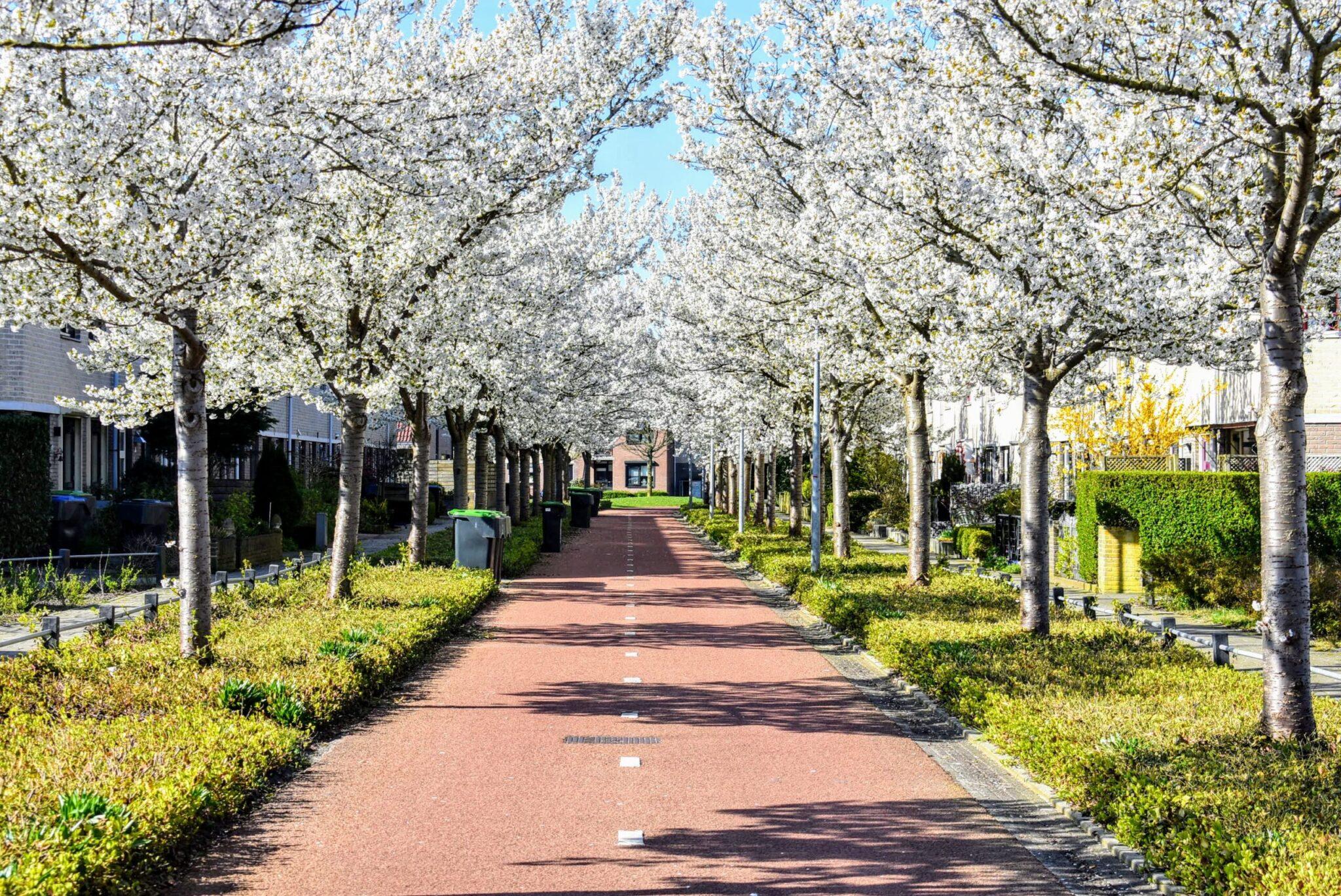hooikoorts harderwijk pollen lente ermelo putten weerbericht april 2021