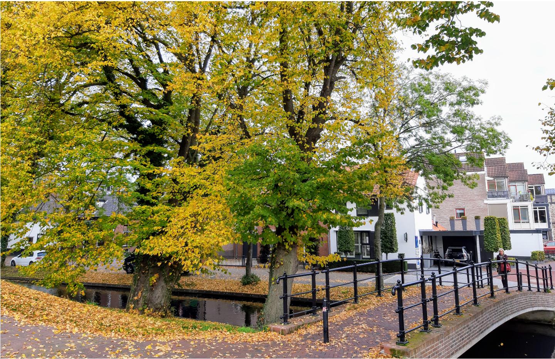 herfstfoto's harderwijk