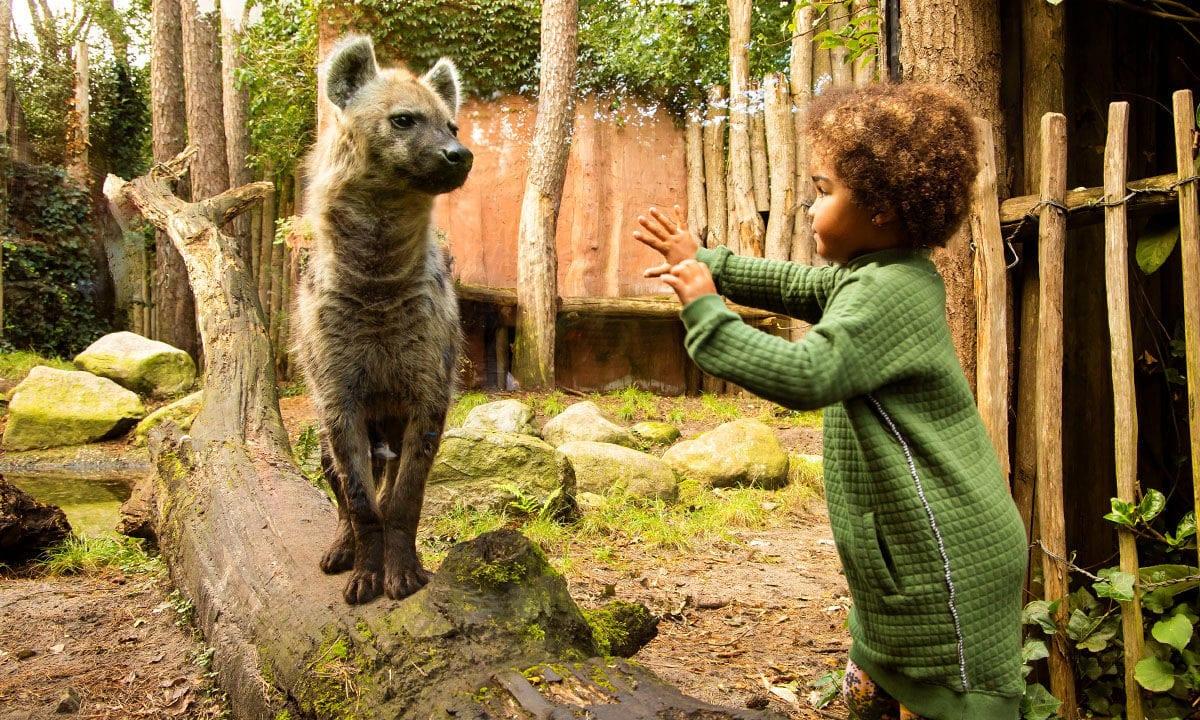 dierenpark amersfoort herfstvakantie