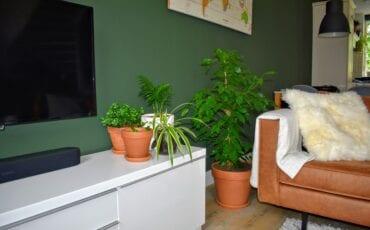 Binnenkijken bij stephan harderwijk planten plantenwalhalla ermelo putten