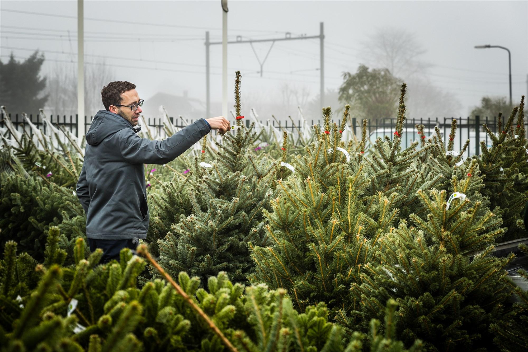 kerstbomen verkoop kerstboom harderwijk ermelo putten