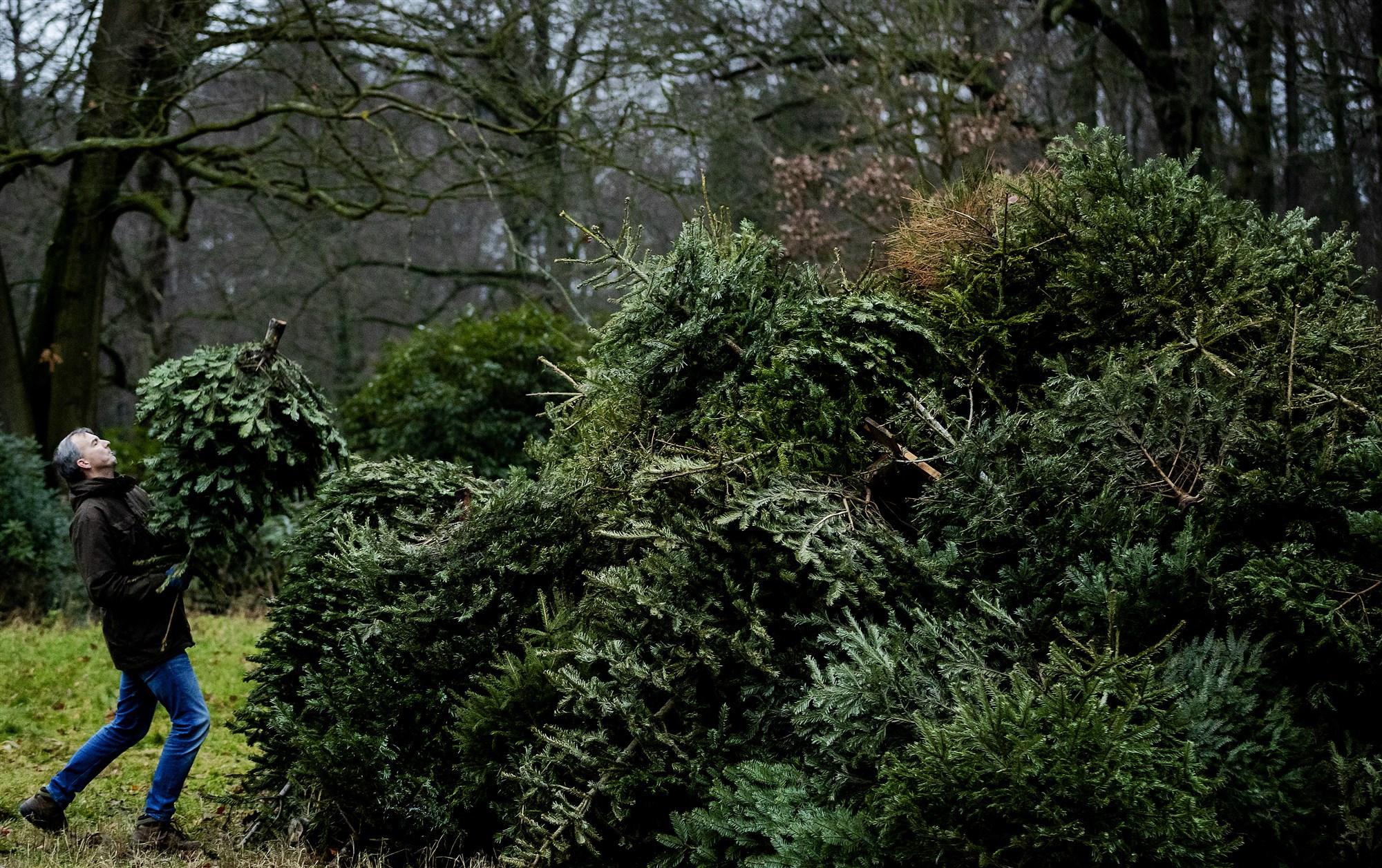 kerstboom inleveren harderwijk ermelo putten 2021 kerstbomen weggooien