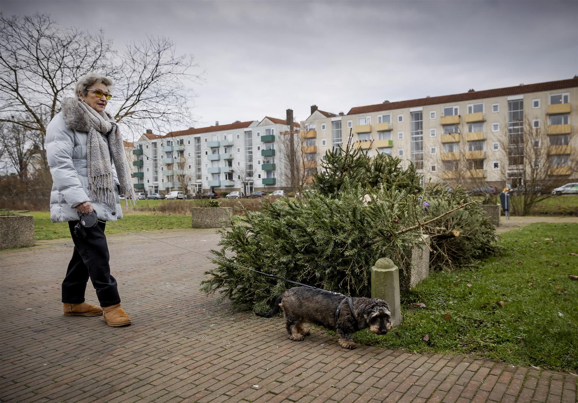 kerstboom inleveren harderwijk 2021