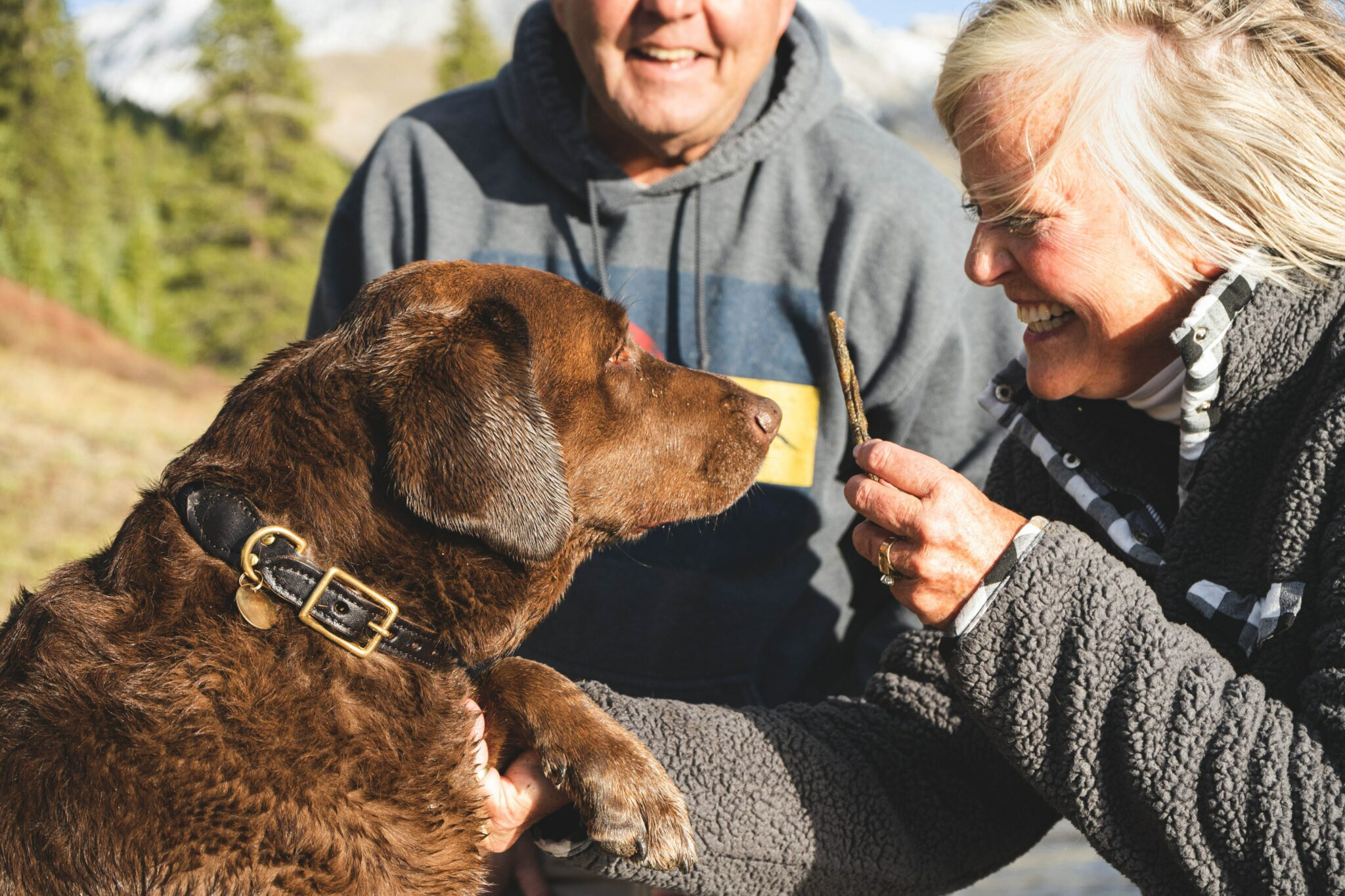 corona testen huisdier huisdieren coronavirus