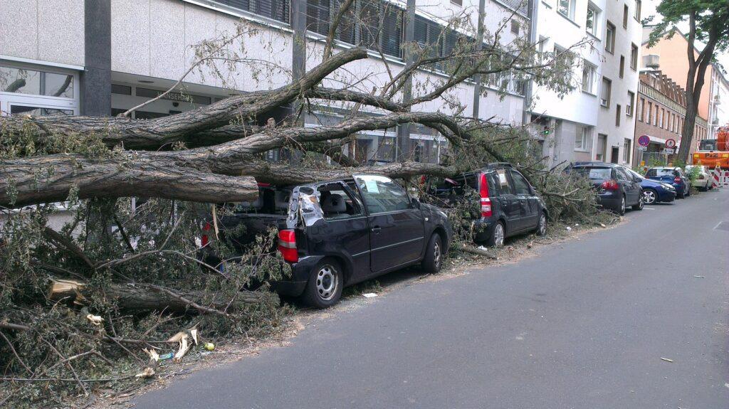 Omgevallen boom. Eerste storm verwacht in Harderwijk, Ermelo en Putten