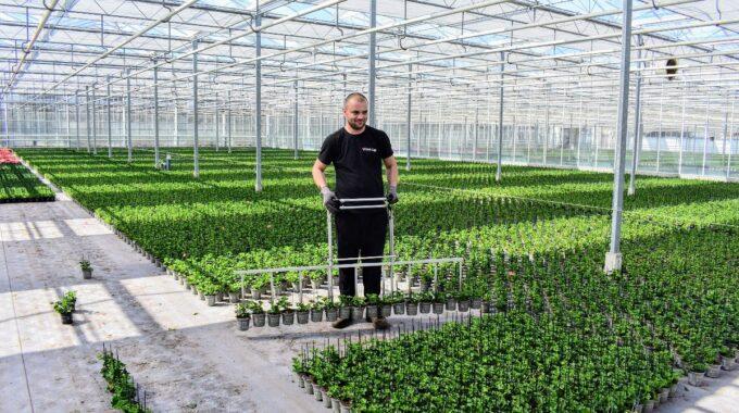 werken planten kas ermelo vacature werk baan