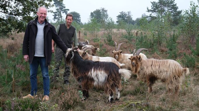 geiten in ermelo landgeiten speuld