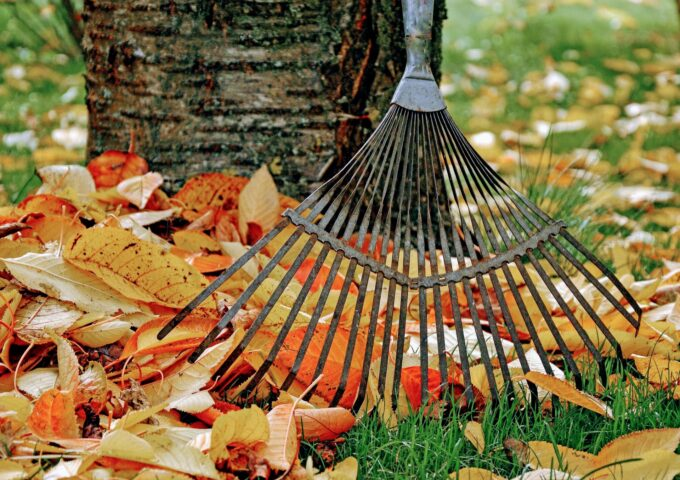 herfstbladeren herfst bladkorven bladkorf harderwijk ermelo putten