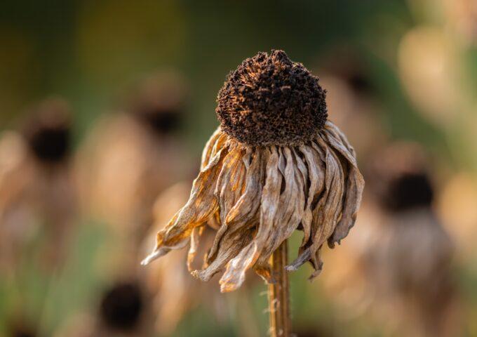 Verlepte plant in je tuin wordt gratis opgehaald door groenafval in Harderwijk
