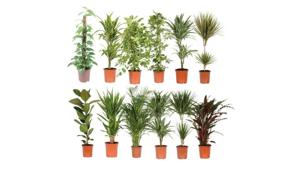 Planten Aldi