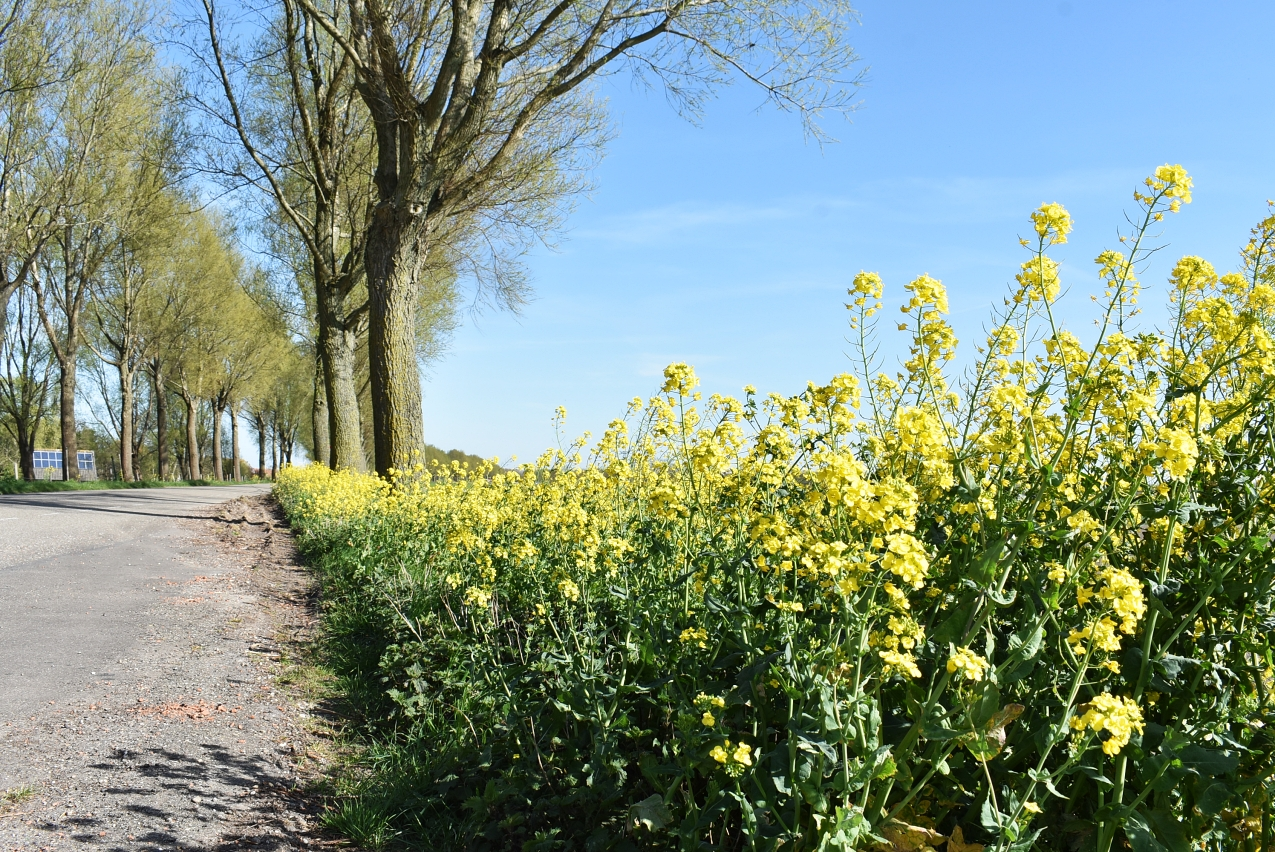 gele bloemen berm