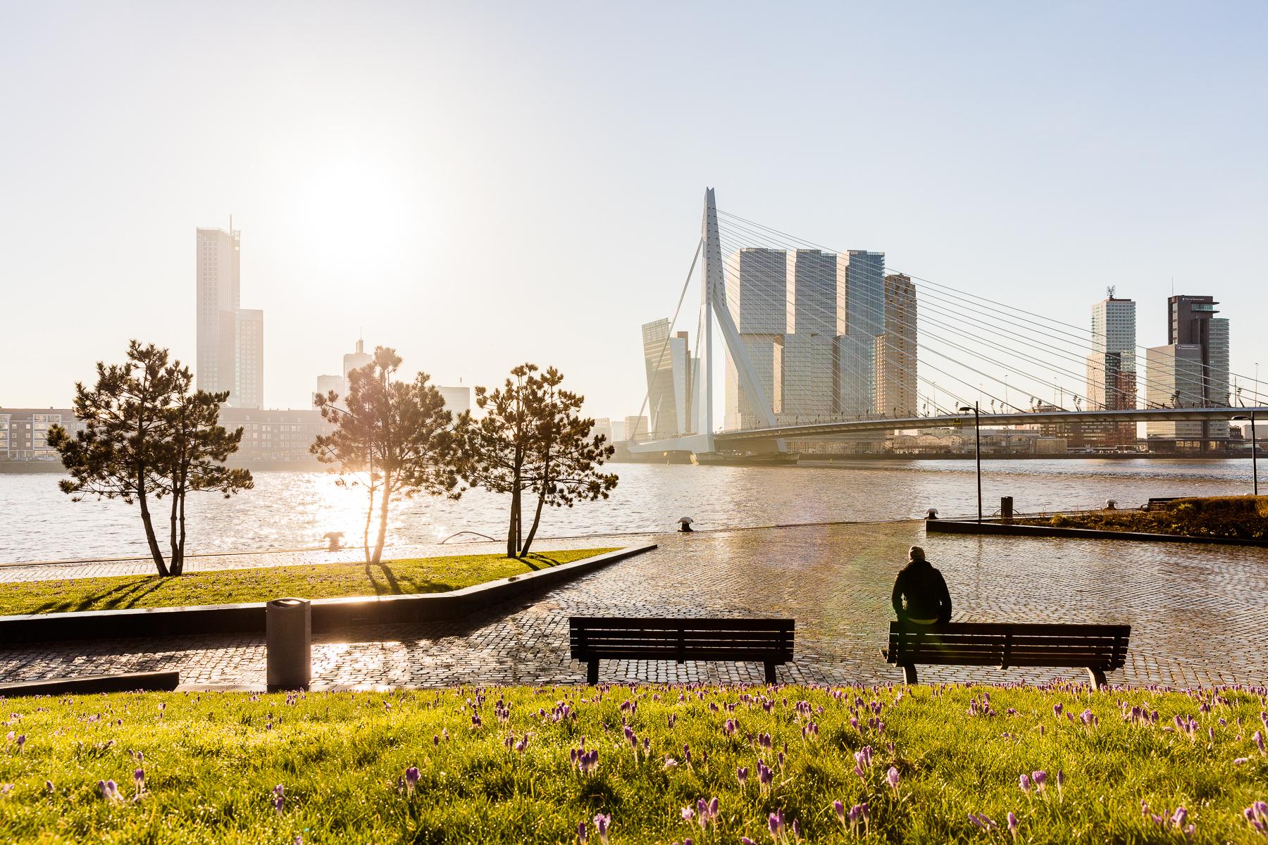 Rotterdam versus Utrecht