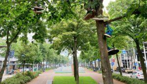 schoenen boom