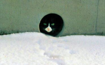 SZR Zwerfkatten in de winter 1