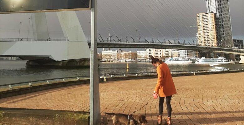 Avondklok Rotterdam reacties
