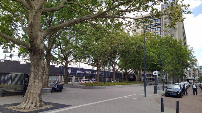 bomenridders platanen naast CS