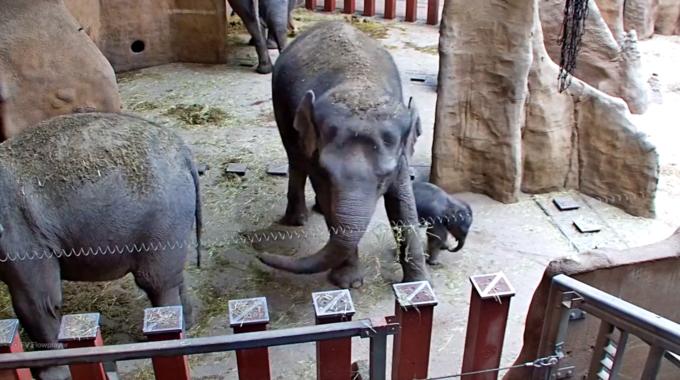 babyolifantje blijdorp