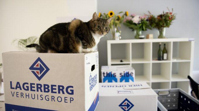 verhuisdoos koopwoning kat