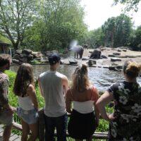 olifanten diergaarde blijdorp bezoekers
